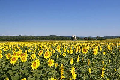 Photograph - Sunflower Nirvana 31 by Allen Beatty