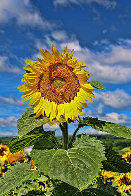 Photograph - Sunflower Nirvana 9 by Allen Beatty
