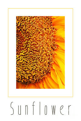 Photograph - Sunflower by Nola Lee Kelsey