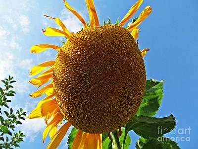 Sunflower Art Print by Olivia Narius