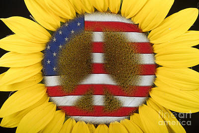 Photograph - Sunflower Peace Sign by James BO  Insogna
