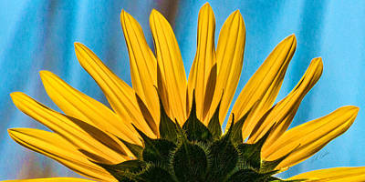 Photograph - Sunflower Peeking by Bill Kesler