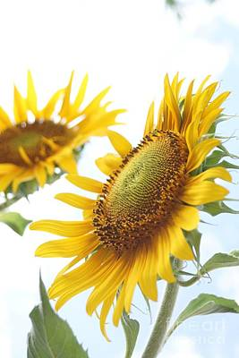 Farmstand Photograph - Sunflower Perspective by Kerri Mortenson