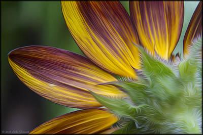 Photograph - Sunflower Petals by Erika Fawcett