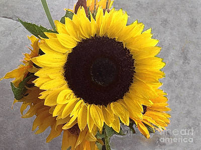 Photograph - Sunflower Photo With Dry Brush Filter by Conni Schaftenaar