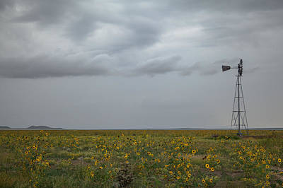Photograph - Sunflower Plains by Ryan Heffron