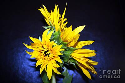 Sunflower Portrait Art Print by Kelly Holm
