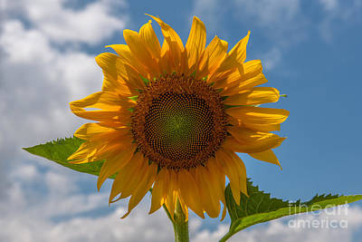 Photograph - Sunflower Power by Dale Powell