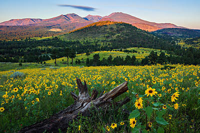 Flagstaff Wall Art - Photograph - Sunflower Power by Guy Schmickle