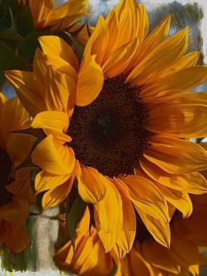 Photograph - Sunflower by Regina Arnold