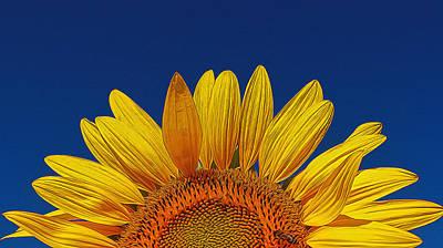 Photograph - Sunflower Rising by Allen Beatty