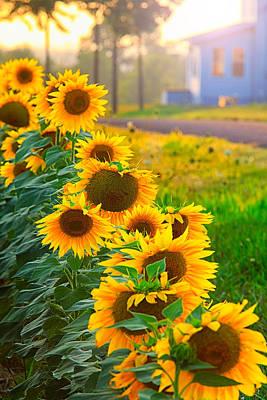 Photograph - Sunflower Row  by Emmanuel Panagiotakis