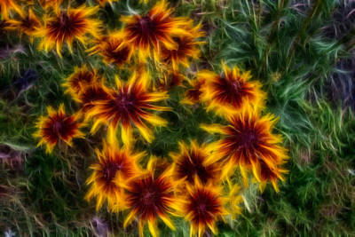 Sunflower Saturation Art Print by Omaste Witkowski