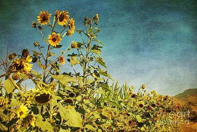 Digital Art - Sunflower Scenic by Peggy Hughes