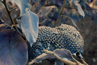 Photograph - Sunflower Seeds And Apple Leaves by Joanne Smoley