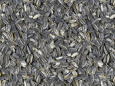 Digital Sunflower Digital Art - Sunflower Seeds by Bedros Awak