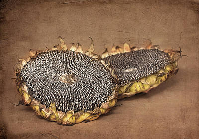 Still Life Photograph - Sunflower Seeds by Jolanta Zychlinska