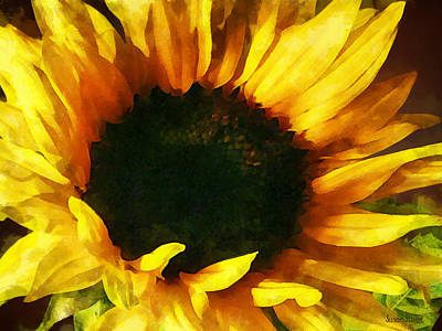 Sunflower Shadow And Light Art Print