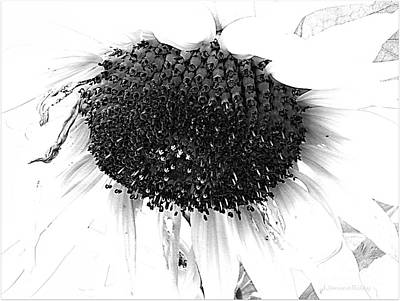 Photograph - Sunflower - Simply Sweet by Janine Riley