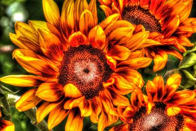 Photograph - Sunflower Smile 2 by Diane Alexander