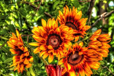 Photograph - Sunflower Smile by Diane Alexander