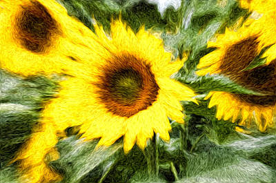 Sunflower Study 3 Art Print by Mitchell Brown