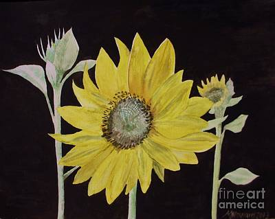 Sunflower Study Original