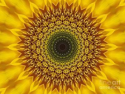 Photograph - Sunflower Sunburst by Annette Allman
