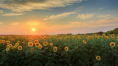 Sunflower Photograph - Sunflower Sundown by Bill Wakeley