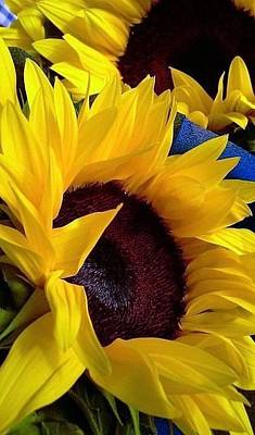 Sunflower Sunny Yellow In New Orleans Louisiana Art Print by Michael Hoard