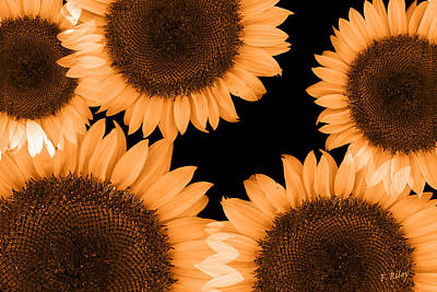 Photograph - Sunflower Sunrise by Fran Riley