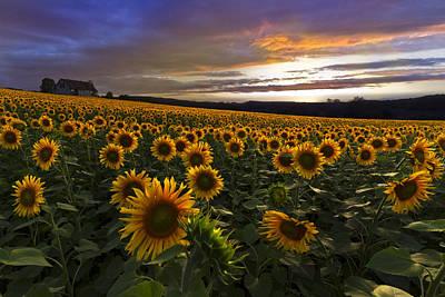 Garden House Photograph - Sunflower Sunset by Debra and Dave Vanderlaan