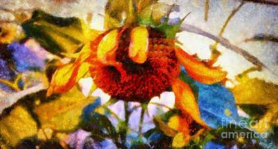 Photograph - Sunflower Tender by Janine Riley