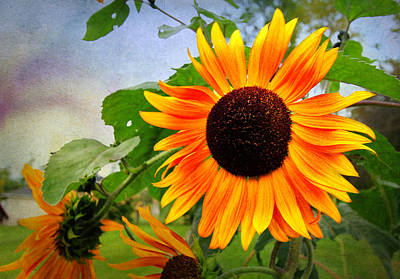 Digital Art - Sunflower by Trina  Ansel