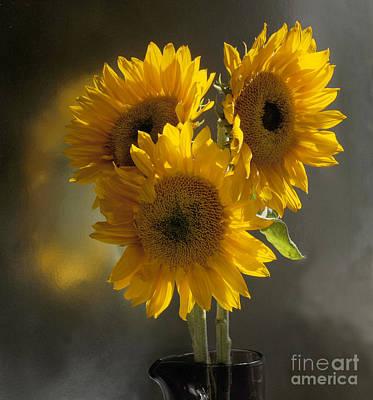 Sunflower Trio Print by Addie Hocynec