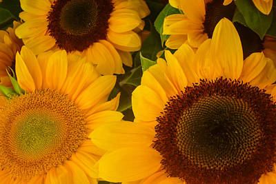 Photograph - Sunflower Trio by Roger Mullenhour