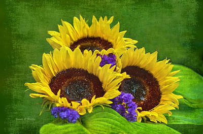Sunflower Trio Art Print