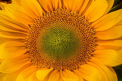 Photograph - Sunflower Up Close  by Roger Mullenhour
