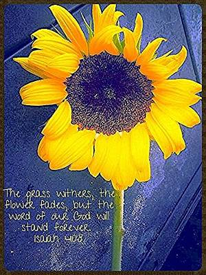 Photograph - Sunflower Verse by Lee Farley