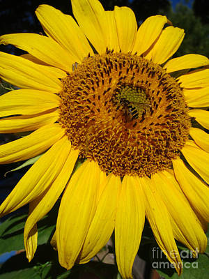 Photograph - Sunflower Visitor Series 5 by Janet Otto