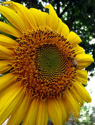 Photograph - Sunflower Visitor Series 6 by Janet Otto