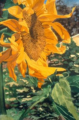 Painting - Sunflower Watercolor Painting Beautiful Flowers Sun Flower Garden Art Floral Artist K. Joann Russell by Elizabeth Sawyer
