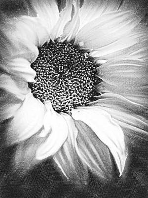 Painting - Sunflower White And Black by Tony Rubino