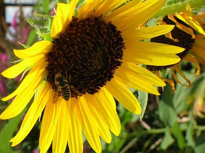 Sunflower With Bee Original