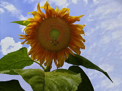 Digital Art - Sunflower With Busy Bees by Chris Flees