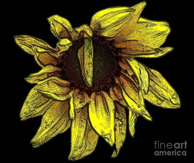 Photograph - Sunflower With Contours Special Effect by Rose Santuci-Sofranko