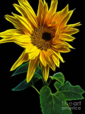 Photograph - Sunflower by Yvonne Johnstone