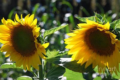 Sunflowers Art Print by Manda Renee