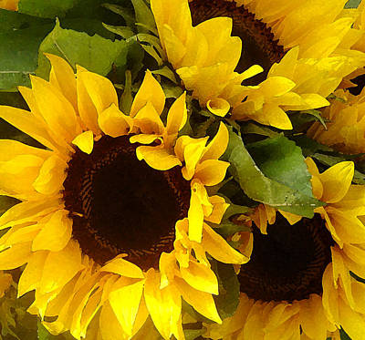 Sunflowers Art Print by Amy Vangsgard