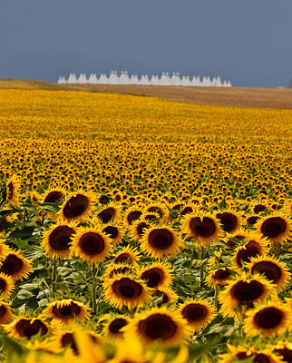 Sunflowers And Airports Art Print